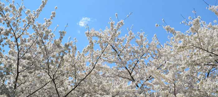 Spring is a wonderful time to enjoy shopping, dining, and the wonderful sights in Quakertown, Bucks County PA